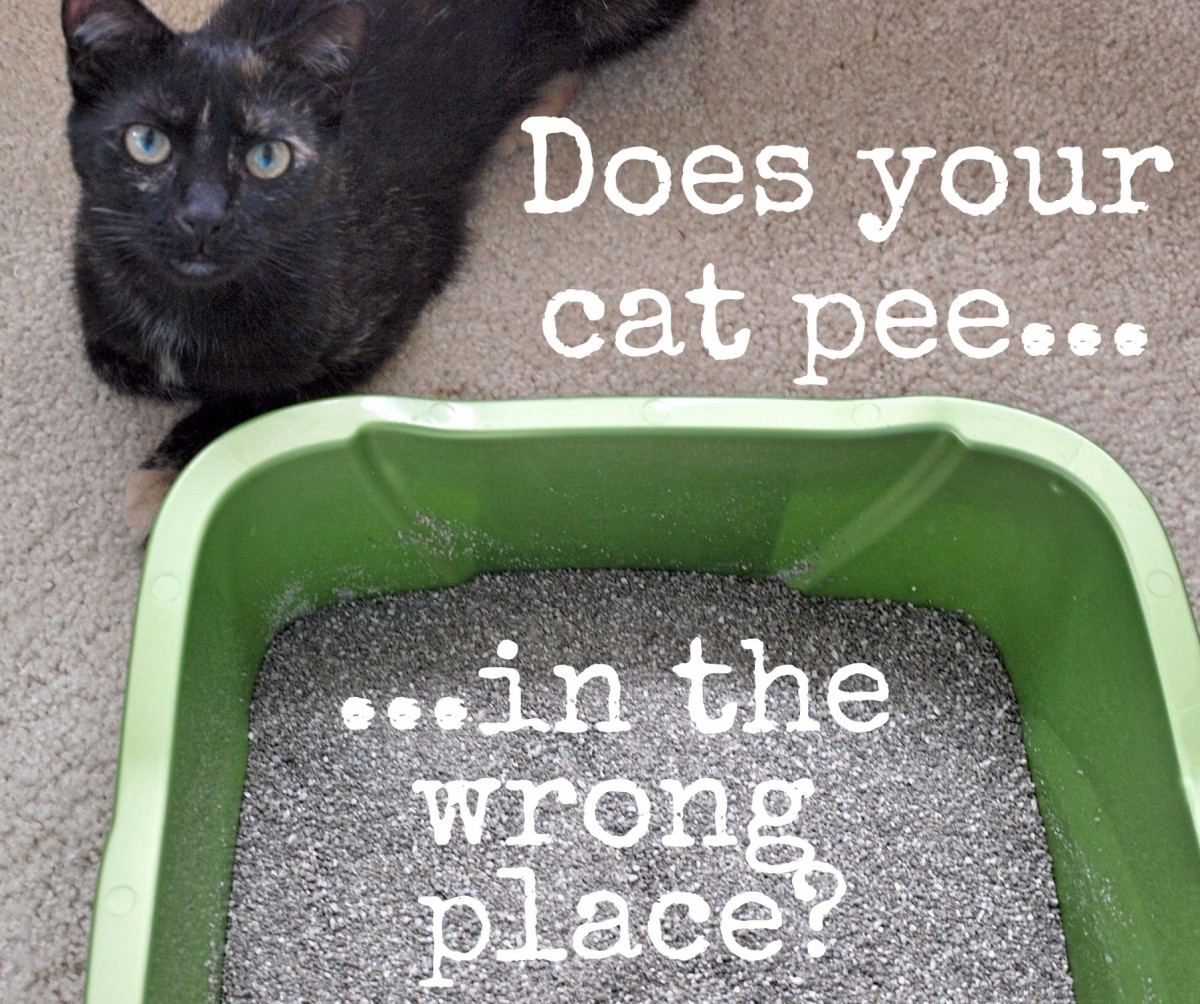 How to Clean Cat Urine Stains and Get Rid of the Odor