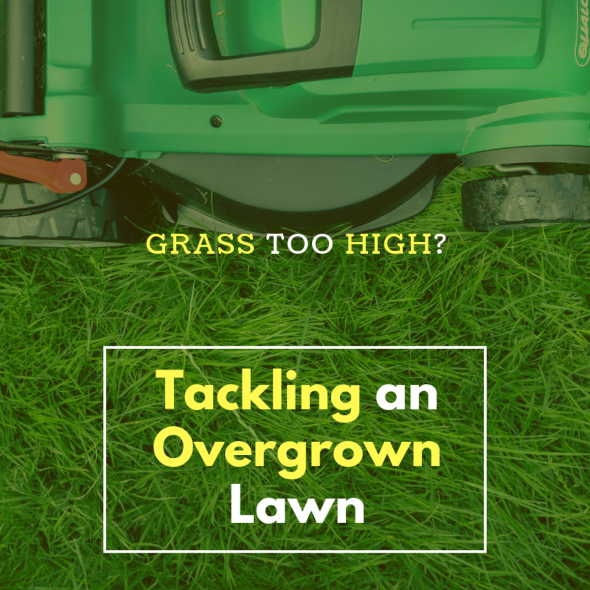 Lawn Too High? How to Cut an Overgrown Lawn | Dengarden