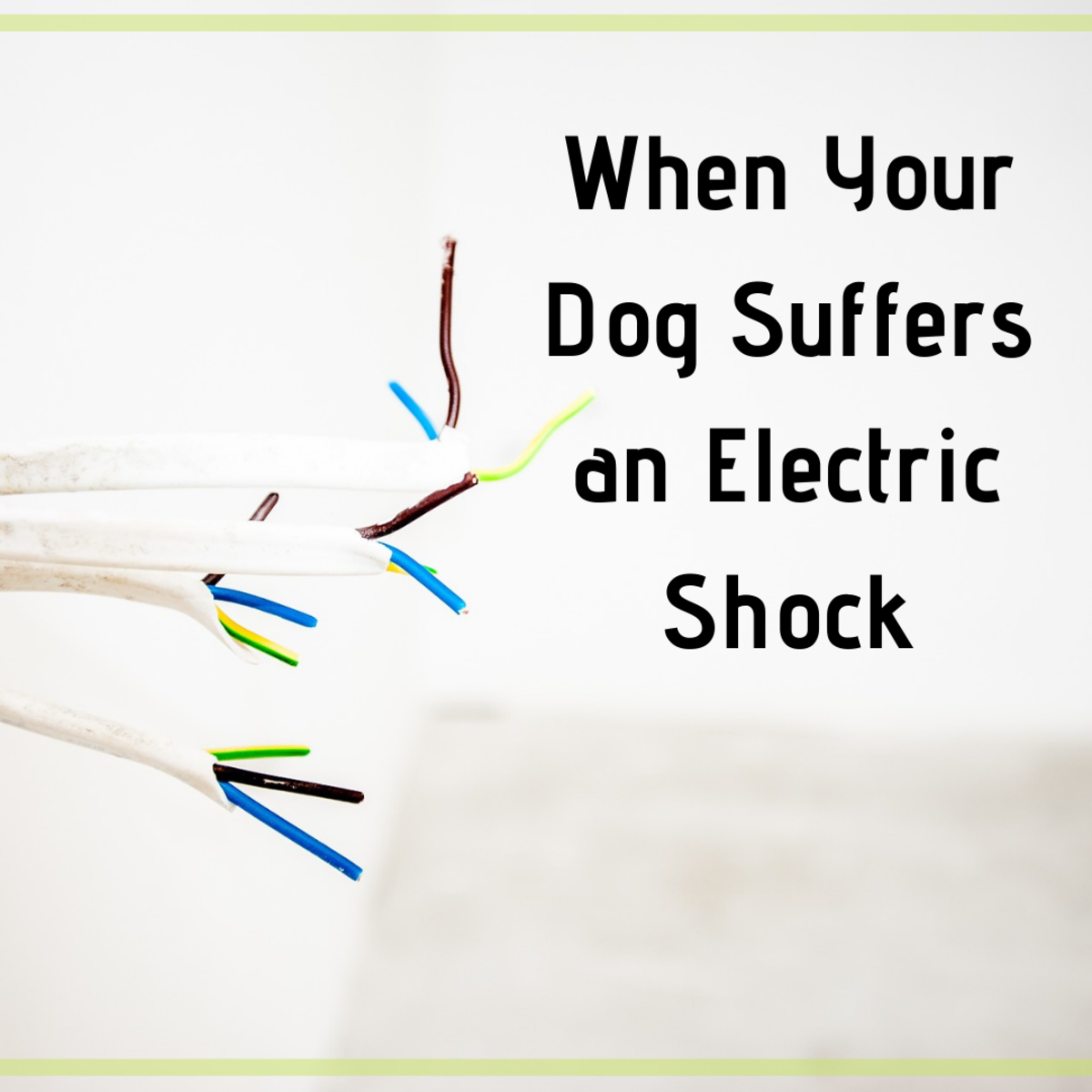 What to Do If Your Dog Has Been Shocked or Electrocuted