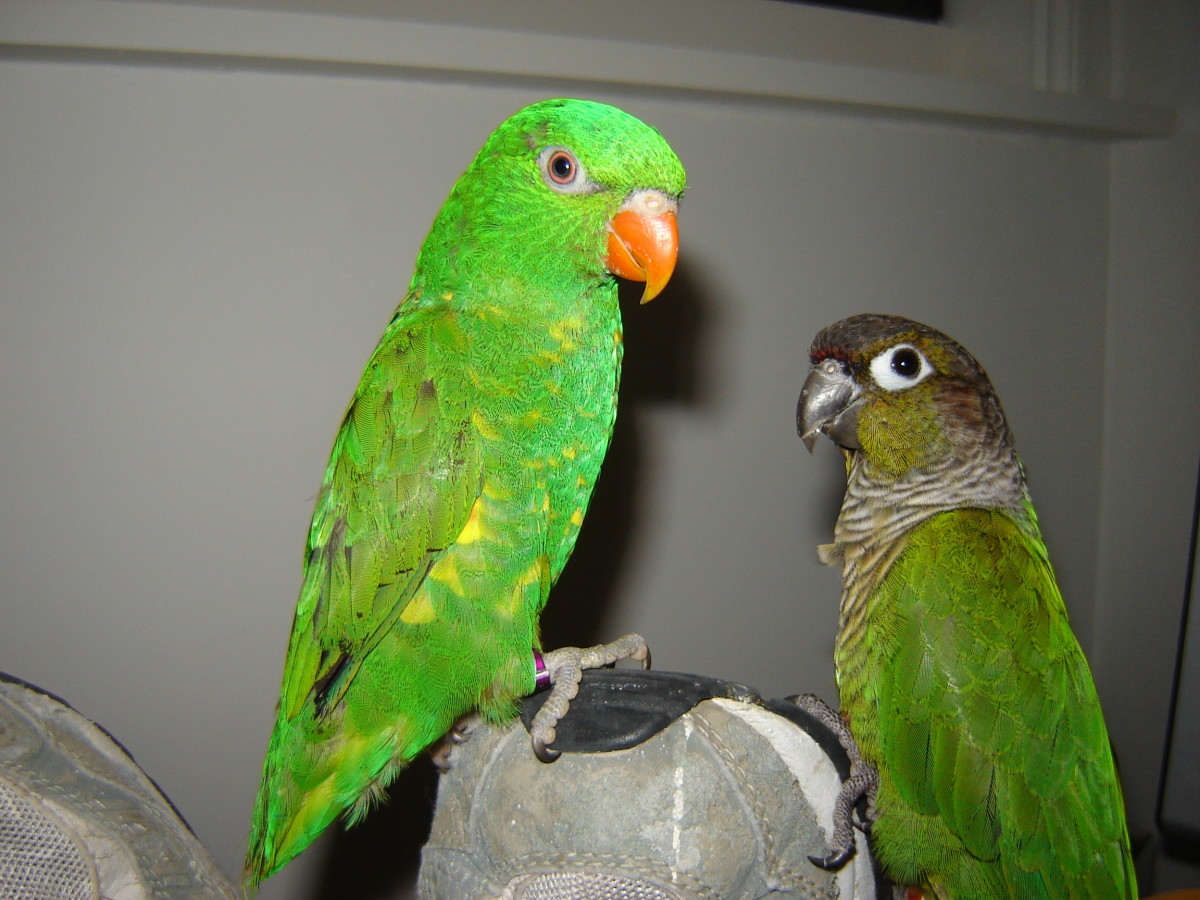 Artie (on the left) and his friend, Rosie.