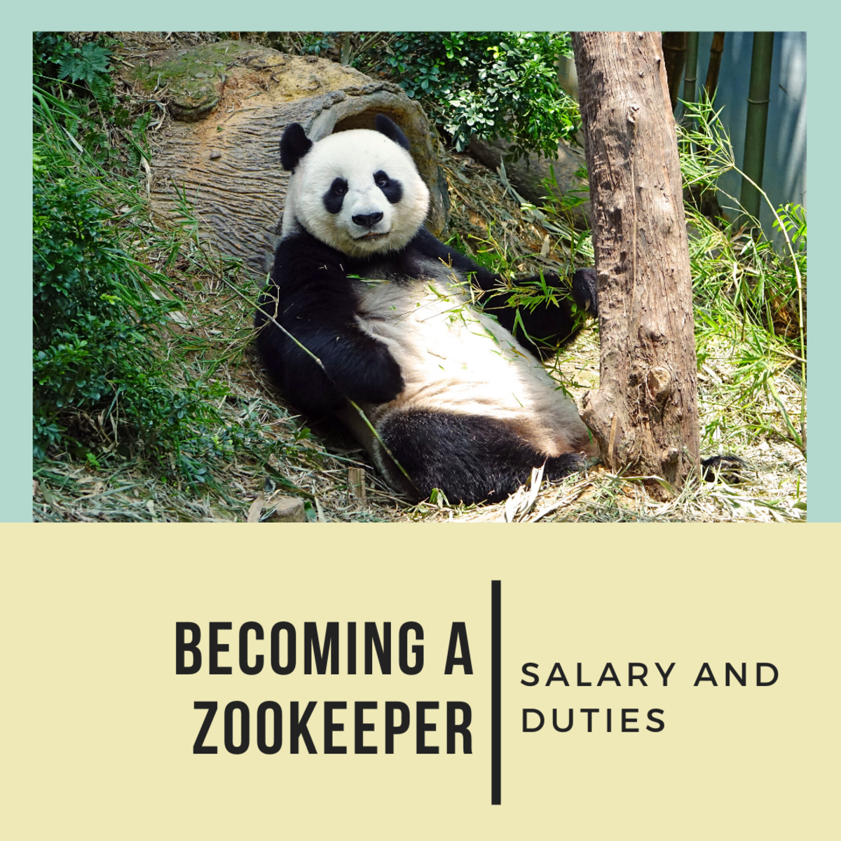 This article includes all you need to know about becoming a zookeeper!