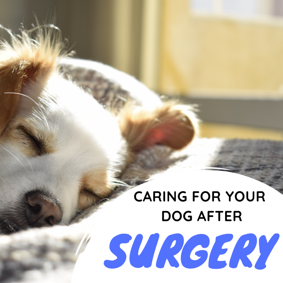 Caring for Your Dog After an Amputation