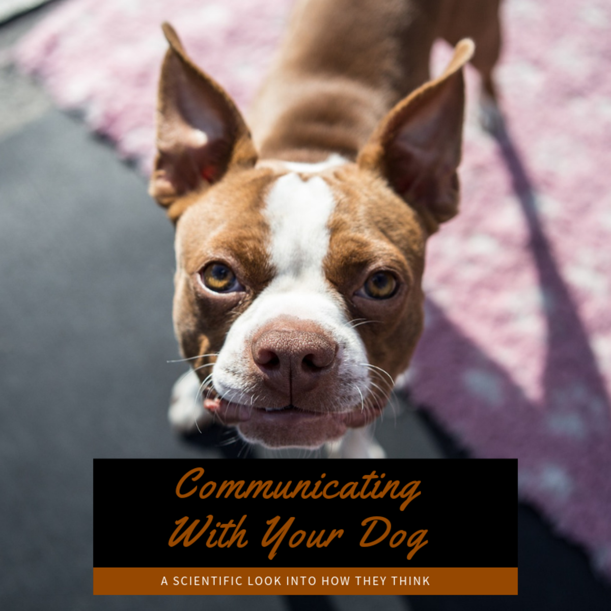 Your Dog Is Smarter Than You Think: Communicating With Your Canine