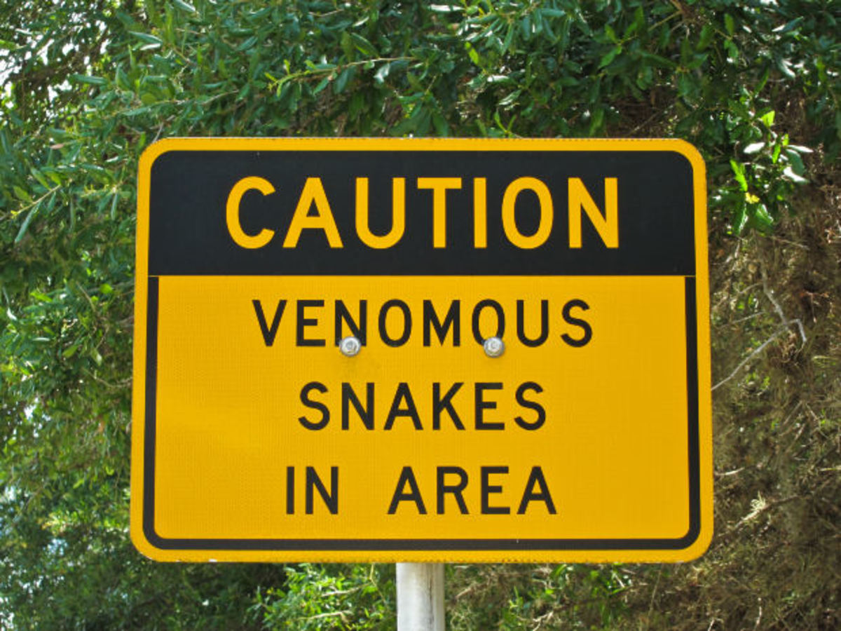 Friendly Snakes Vs. Not So Friendly Snakes... Identifying Venomous Snakes in the United States