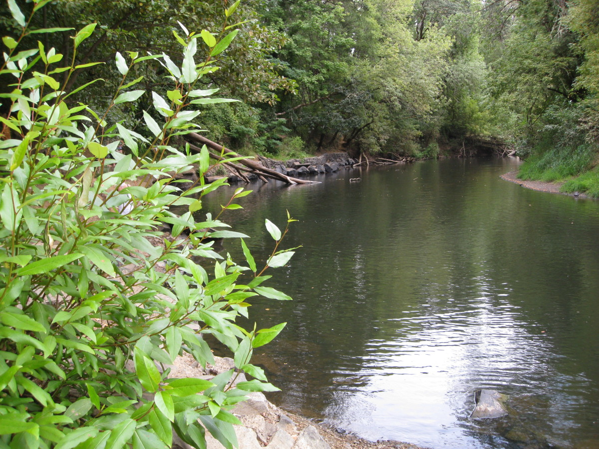 Swimming Holes in Corvallis, Oregon