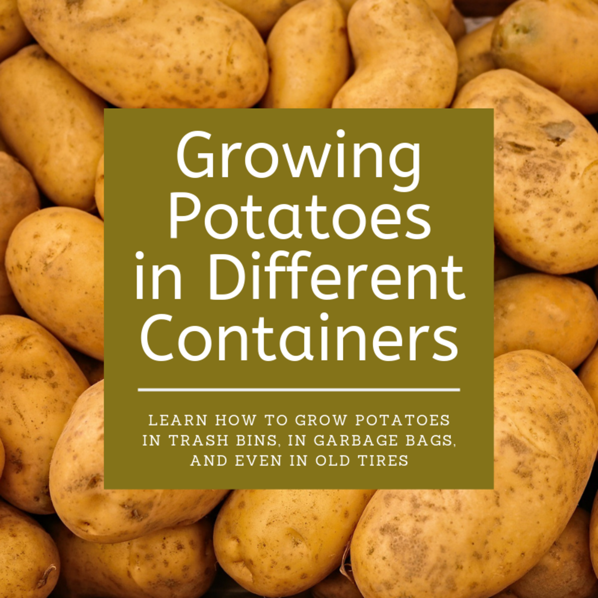 Trash Cans, Garbage Bags, and Old Tires: How to Grow Potatoes in Different Containers