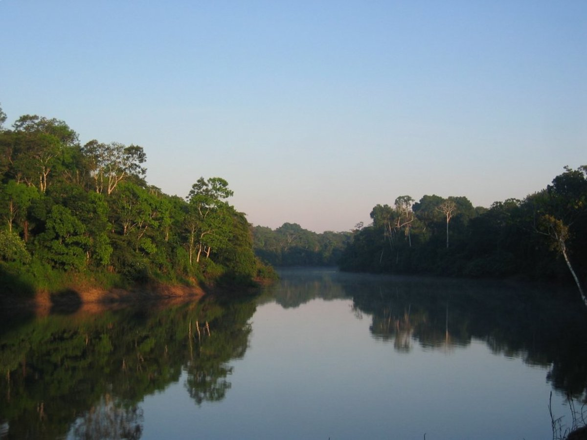 Morning in the Amazon.