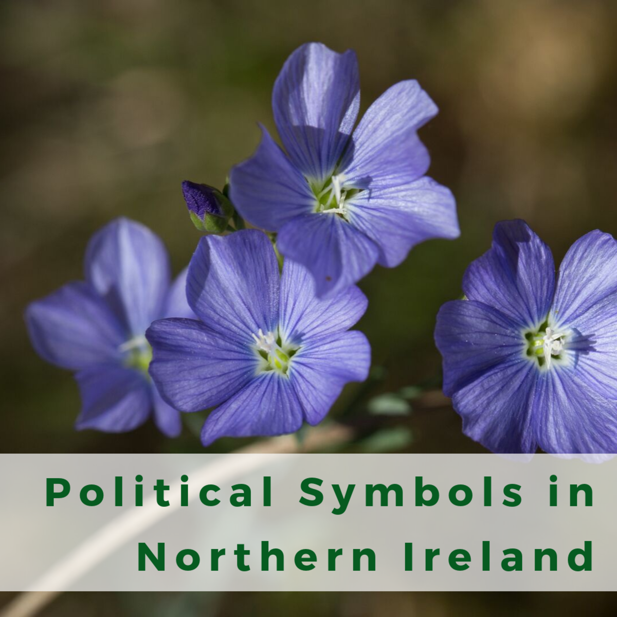 A Guide to Northern Irish Political Symbols