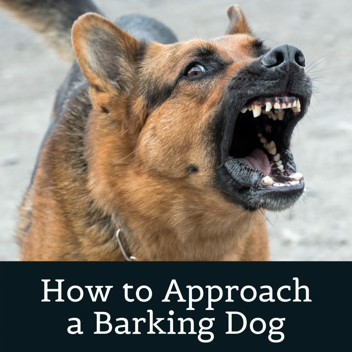 How to Correctly Approach a Dog That's Barking at You