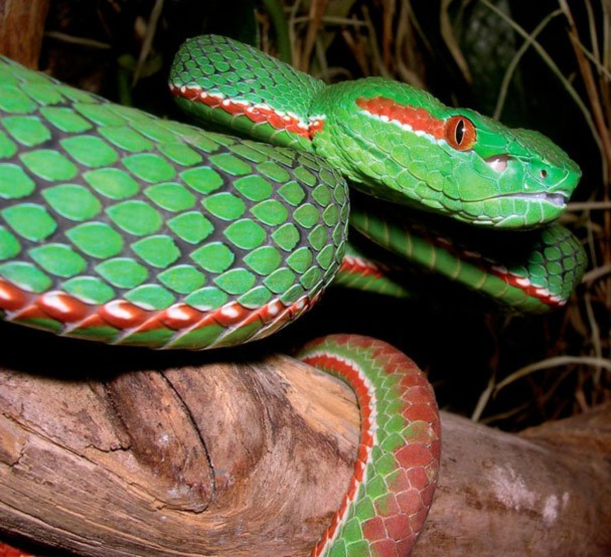 13 Most Beautiful Snakes In The World Owlcation