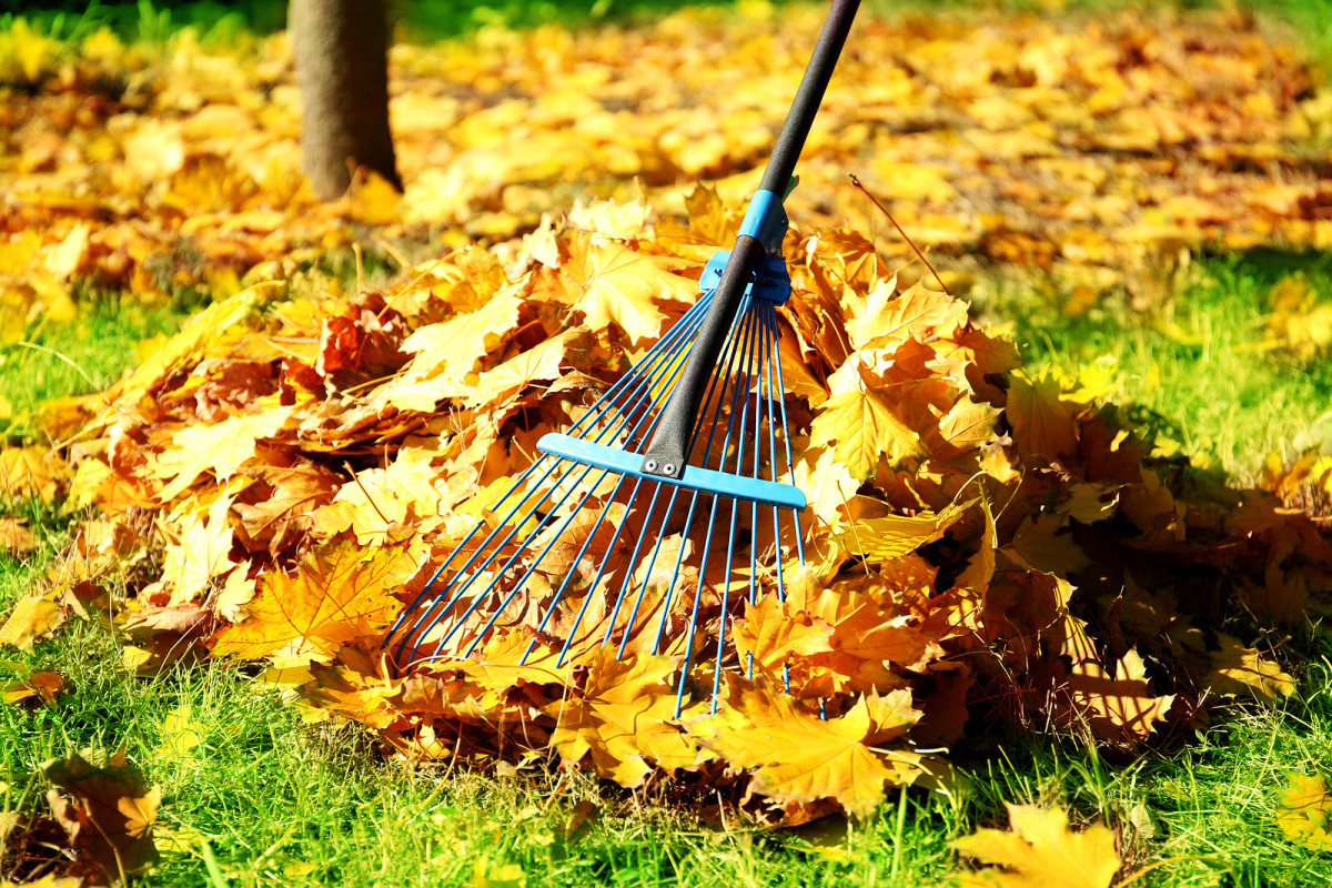 Alternatives to Gas-Powered Leaf Blowers