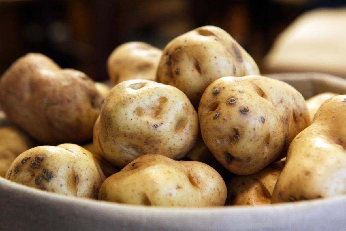 Irish Potato Famine Morphs Into Food Sustainability