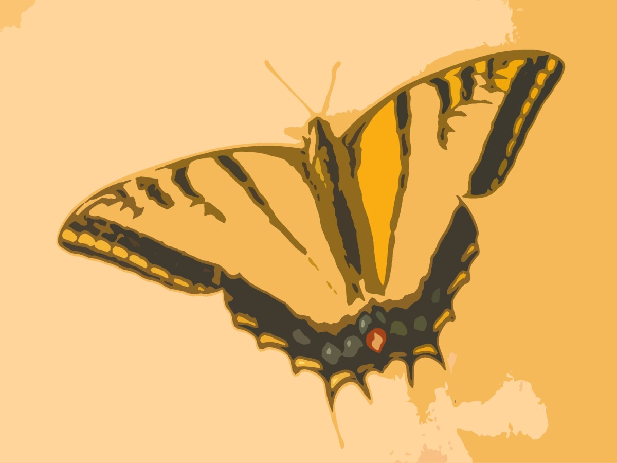 Mary: A yellow and black butterfly