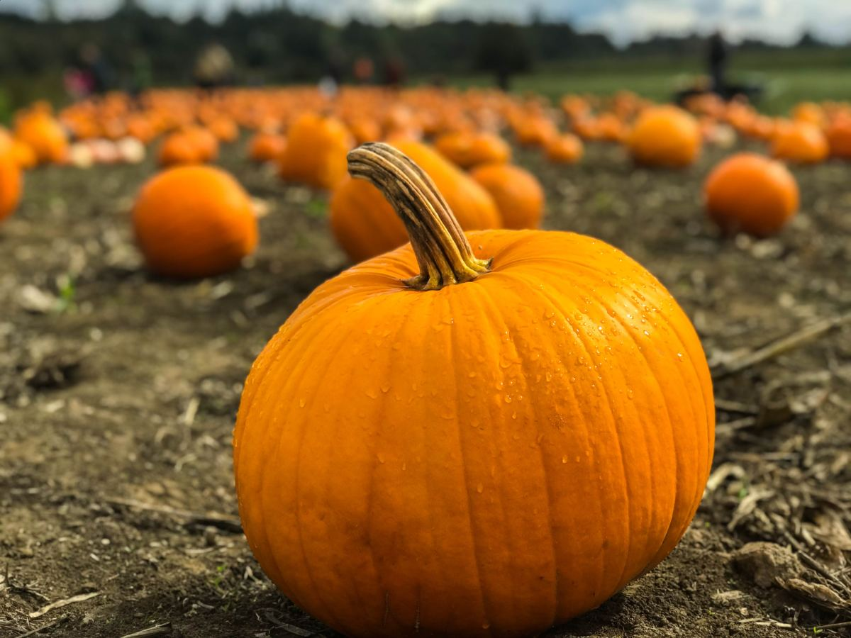 Four Good Substitutions for Canned Pumpkin