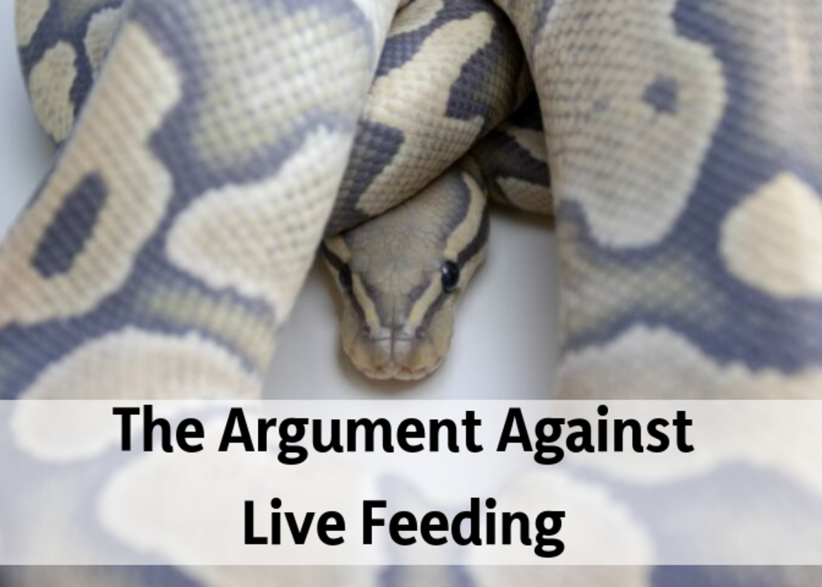 Learn why it's cruel to feed live food to pets and zoo animals.