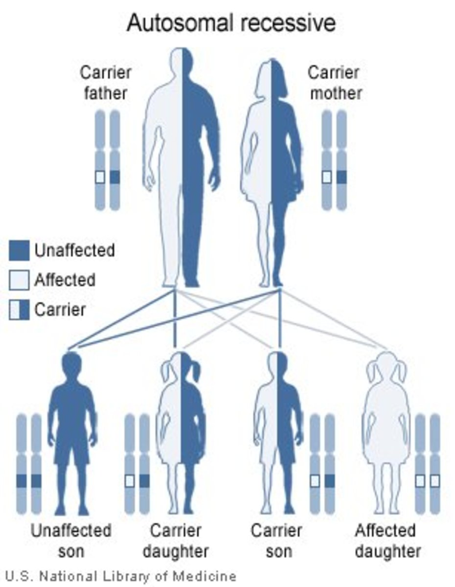 The Heterozygote Advantage: Examples of Disease-Causing Genes That Give Humans an Edge