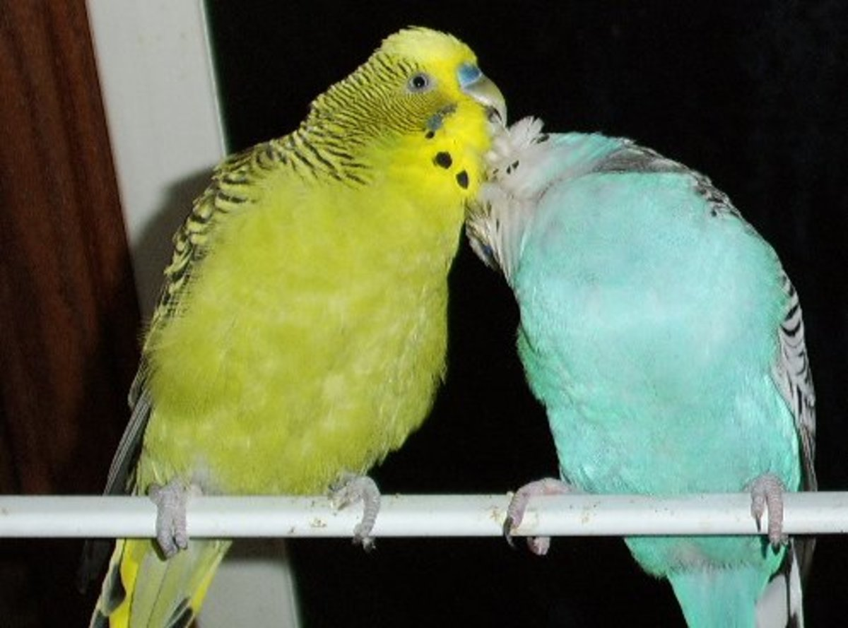 Budgies are not meant to be kept solitary.