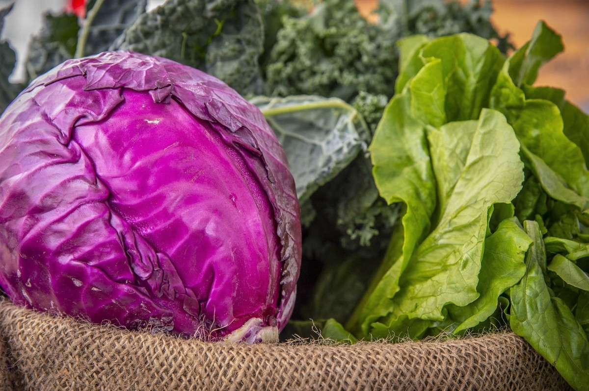 Cabbage of any colour is healthy, but red cabbage has the advantage of containing anthocyanins.