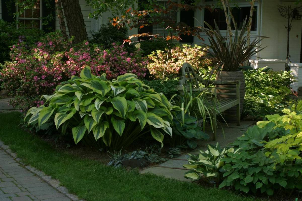 With lots of luck, patience, and a green thumb, you could have hostas like these!