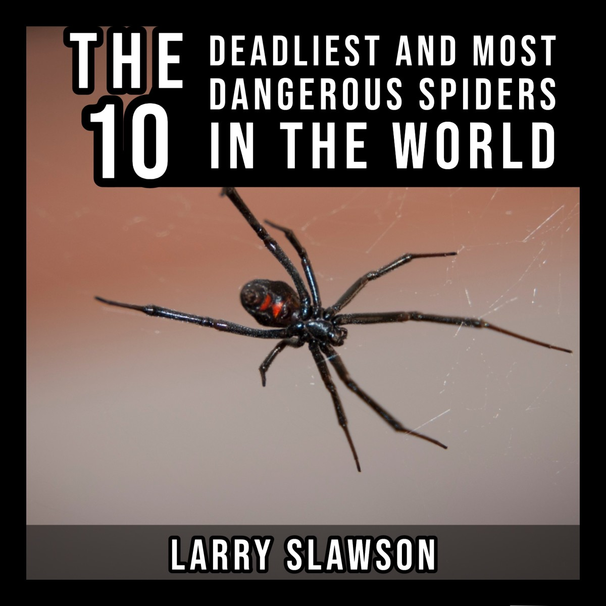 The top 10 deadliest spiders in the world.