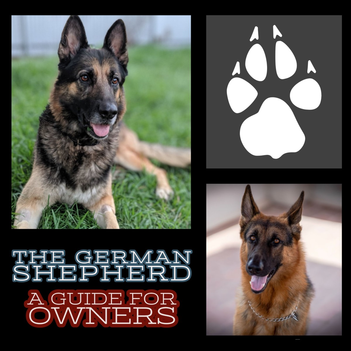 The German Shepherd: A Guide for Owners