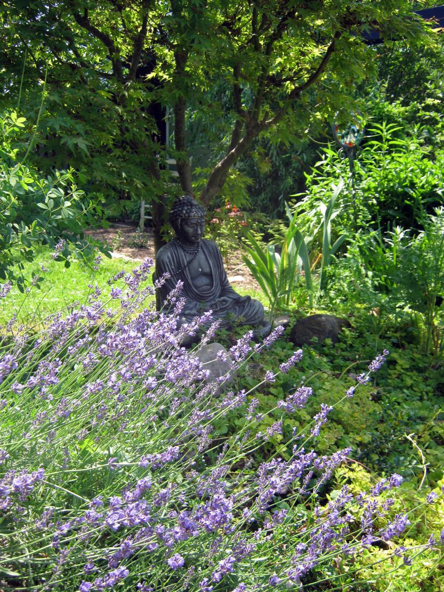 Grow Lavender in Acid or Clay Soil