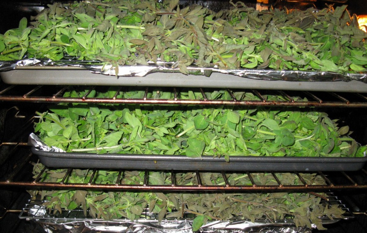 Tips Amp Tricks For Drying Herbs In A Convection Oven