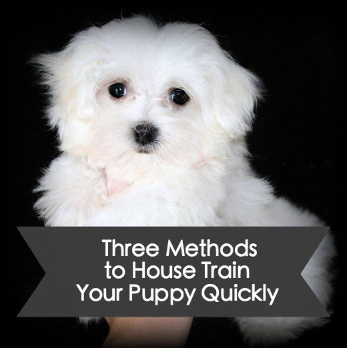 Potty Train Your Dog Fast