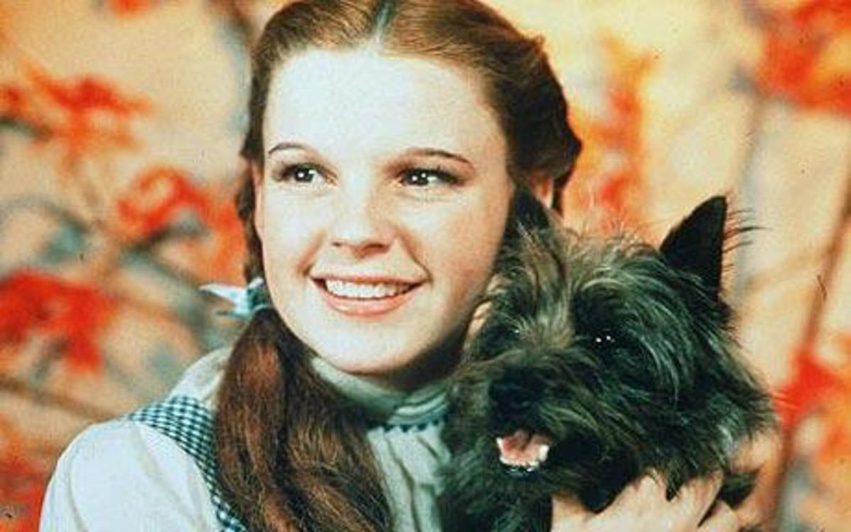 """Toto with Judy Garland in the """"Wizard of Oz"""""""