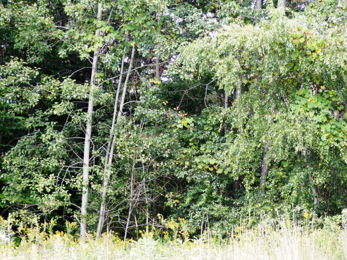 Bigfoot Sightings in Pennsylvania | Exemplore