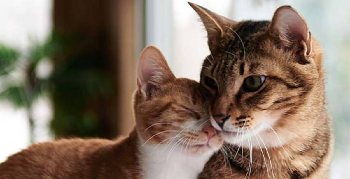 First-Time Cat Owner Advice: Tips and Supplies for Making Your Furry Friend Happy in Their New Home