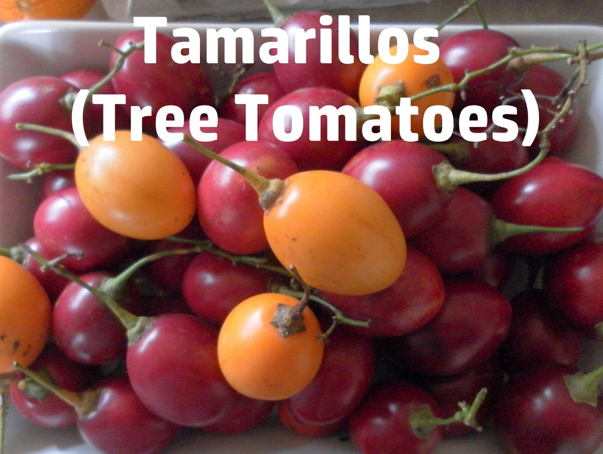 An Introduction to Tamarillos and How to Make Jam With Them