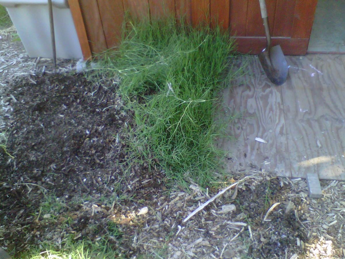 Removing Bermuda Grass Organically