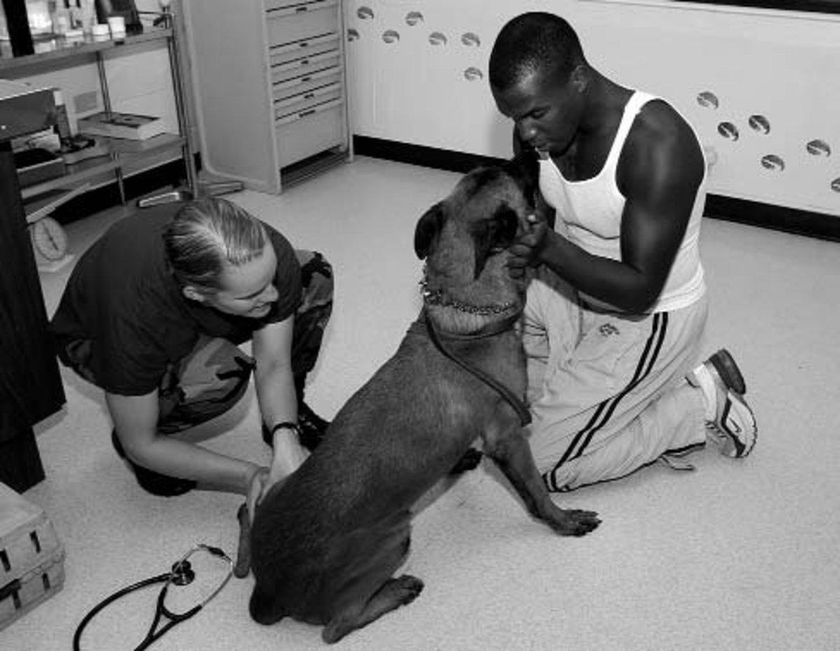 Why Can't I Give My Dog Baby Aspirin?