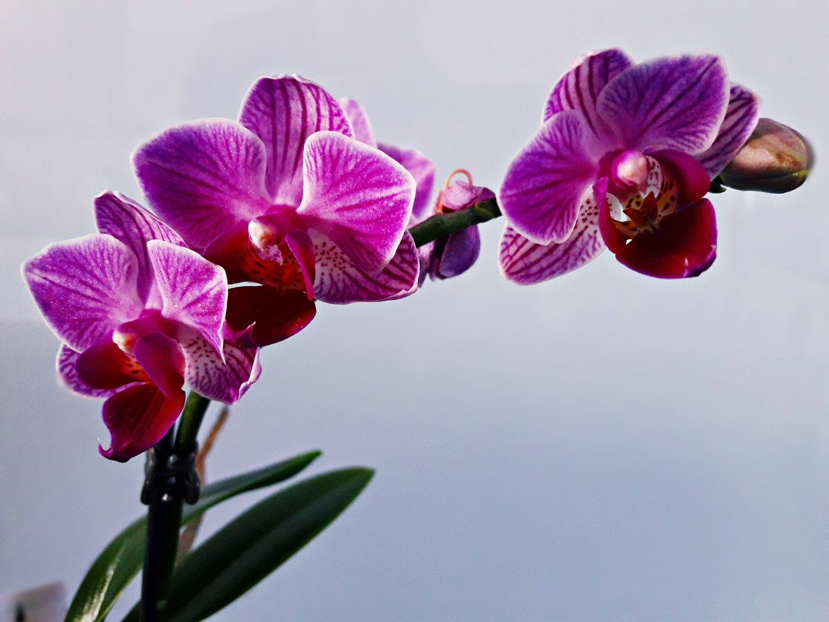 You may have heard that orchids are difficult to grow—but this rumor is false.