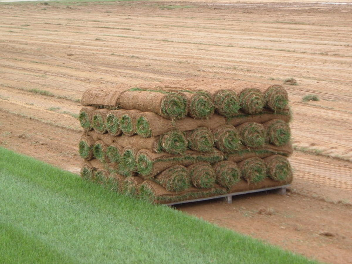 Installing Sod: What You Need to Know About Laying & Maintaining New Sod