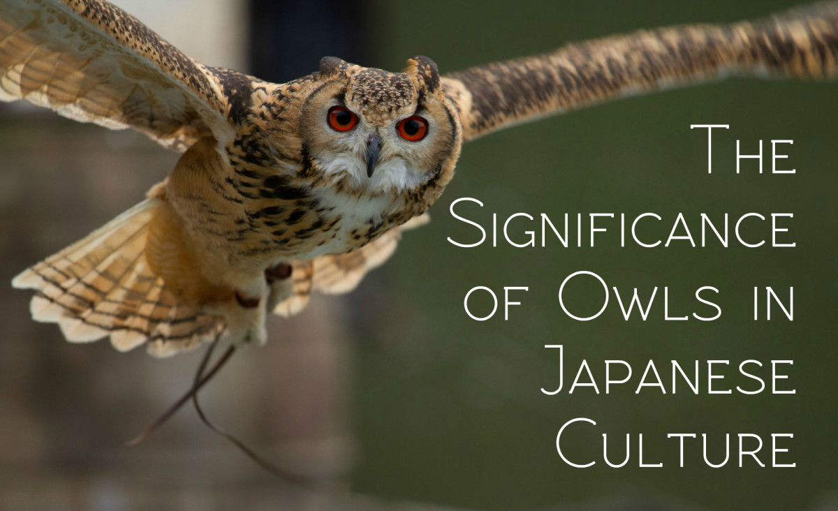 The Significance And Meaning Of Owls In Japanese Culture Owlcation