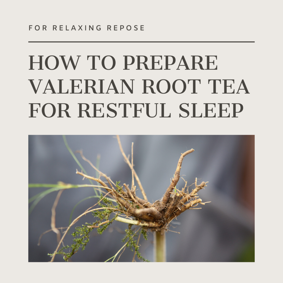 This article will break down how to brew your own valerian root tea to promote restful sleep.