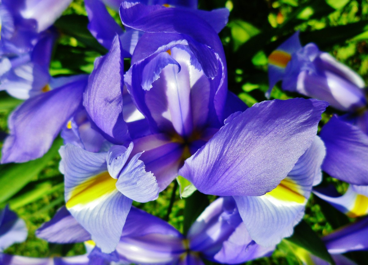 Looking directly down on the vase of Irises set on the grass in our backyard.