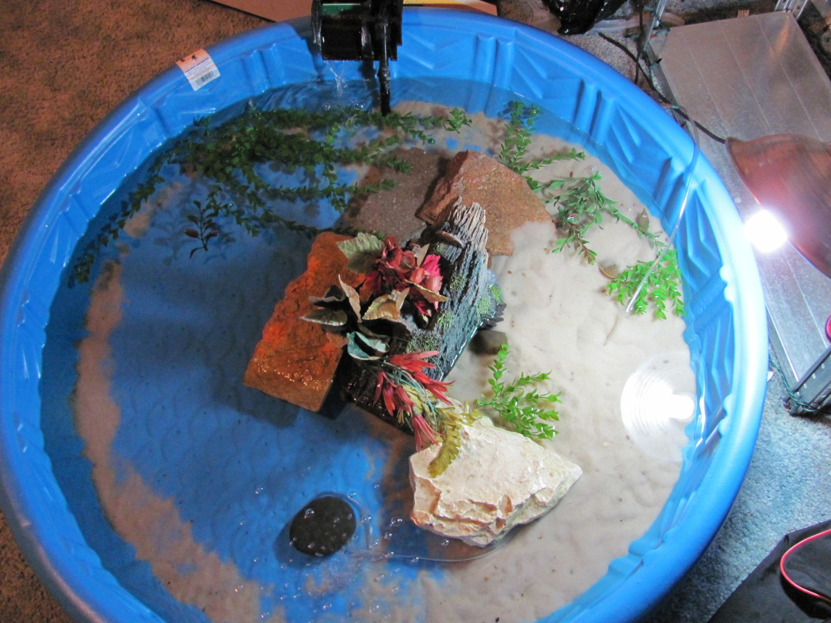 Indoor Turtle Pool Setup