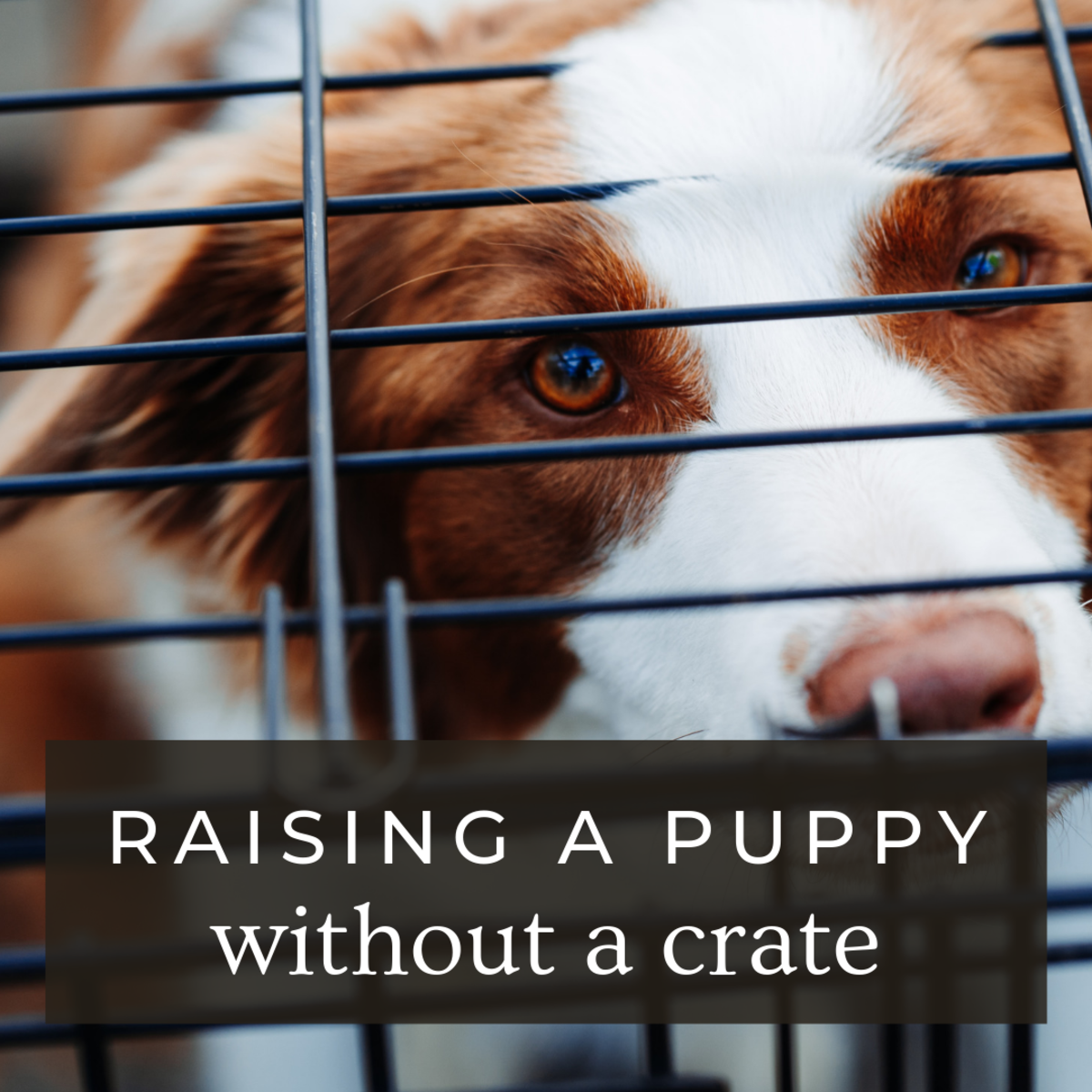 Raising Puppies Without a Crate