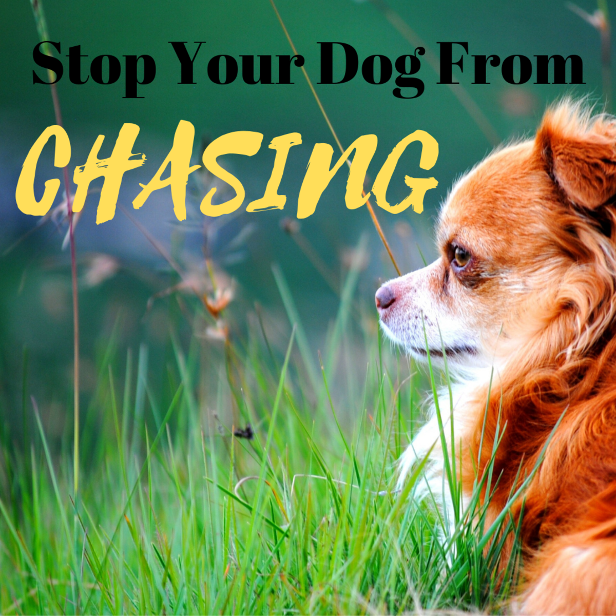 Stop Your Dog From Chasing Small Animals