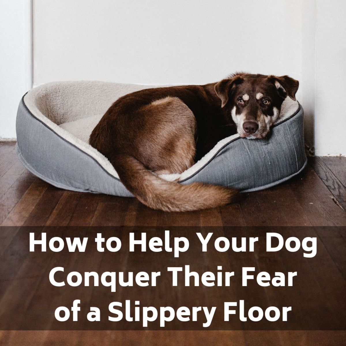 Is your dog suddenly afraid of your tile, linoleum, or other type of slippery floor? Learn why and how to help her overcome her fear.