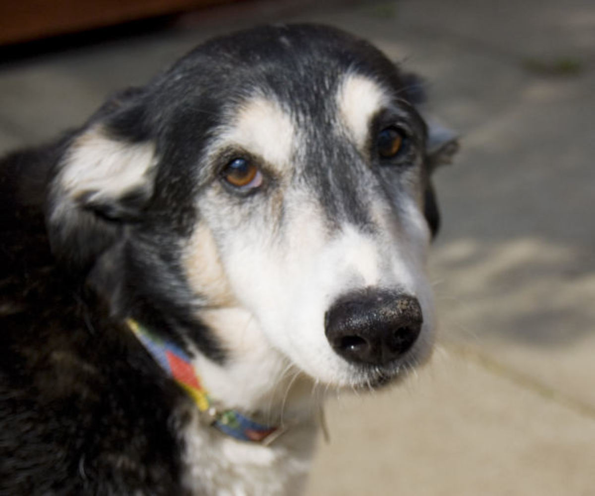 Why Is My Old Dog Suffering From Sudden Separation Anxiety?