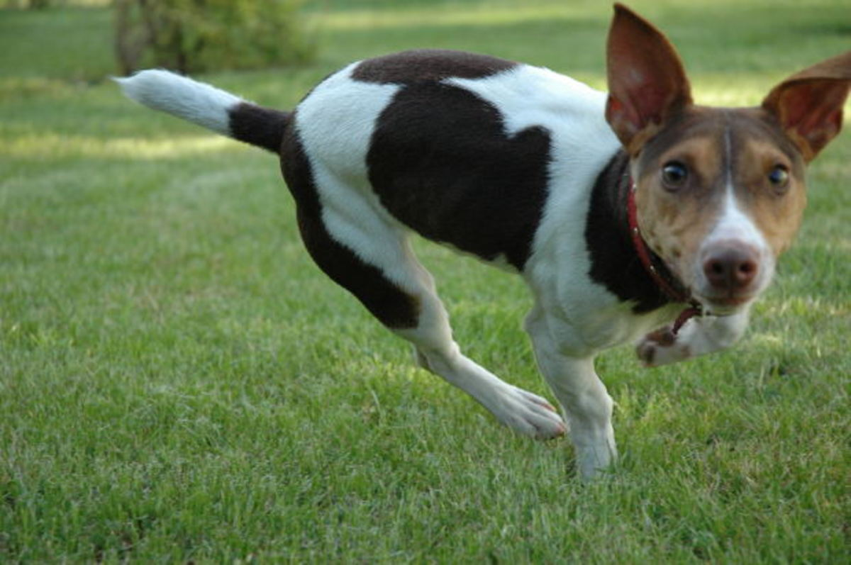 How to Help a Dog Terrified of Insects