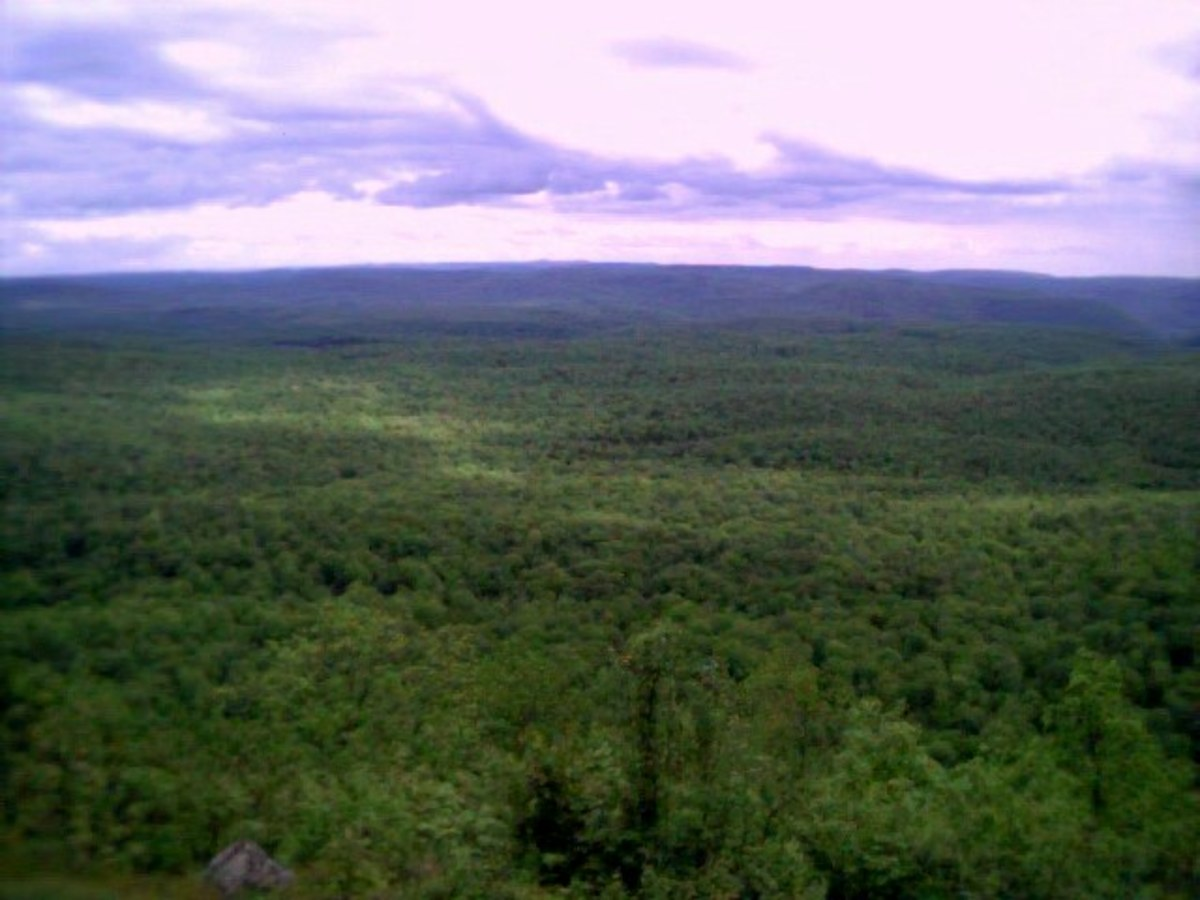 Photo from Loyalstock State Forest near Williamsport, Pennsylvania (Old Loggers Path)