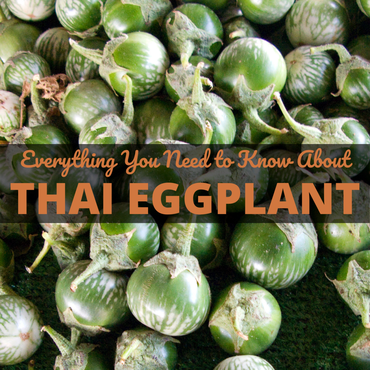 How much do you know about Thai eggplant?