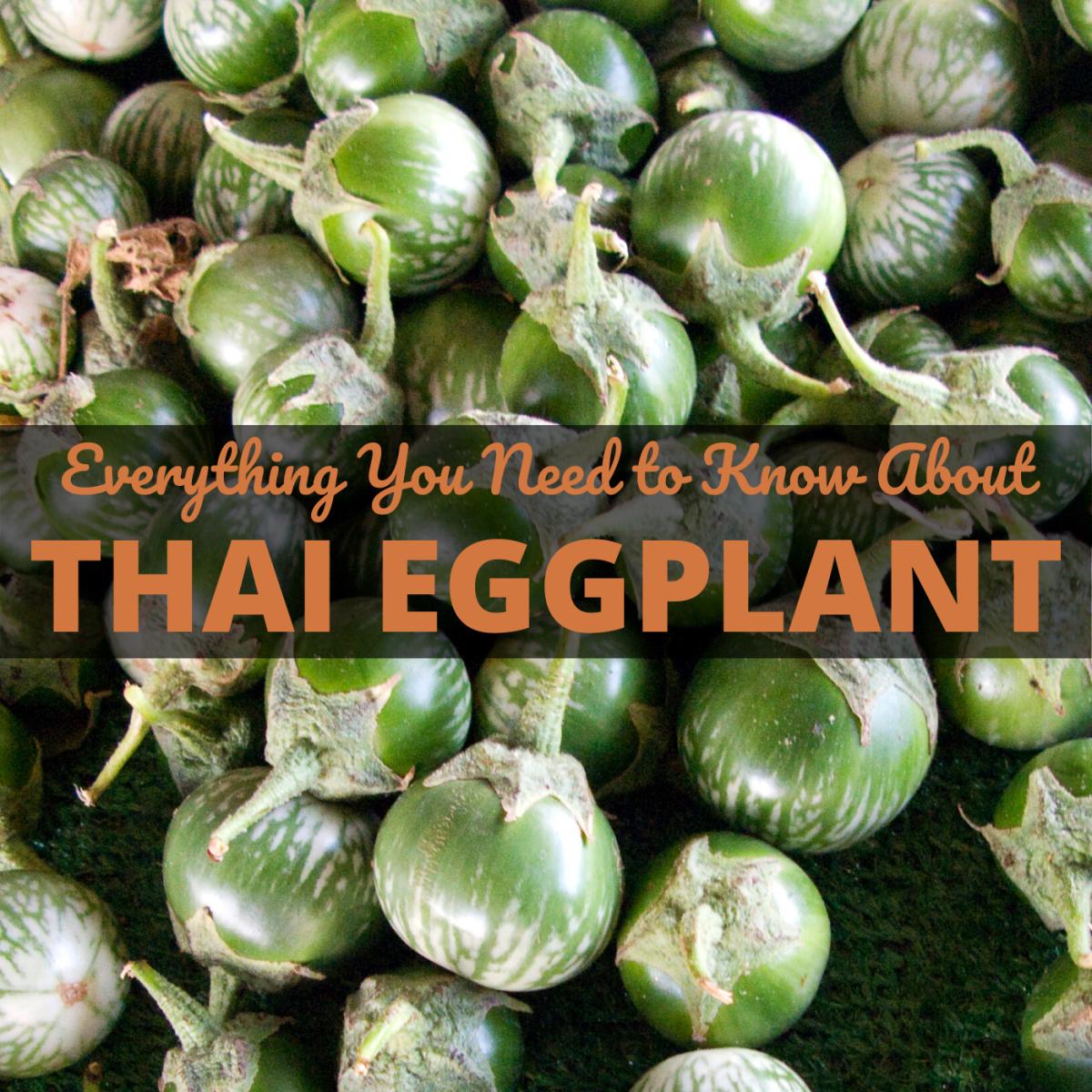 Thai Eggplant: A Popular Thai Food Ingredient