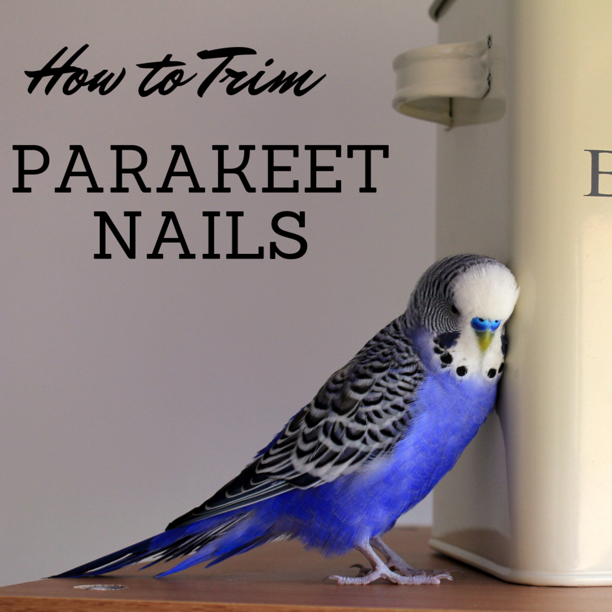 How to Clip and Trim a Parakeet's Nails