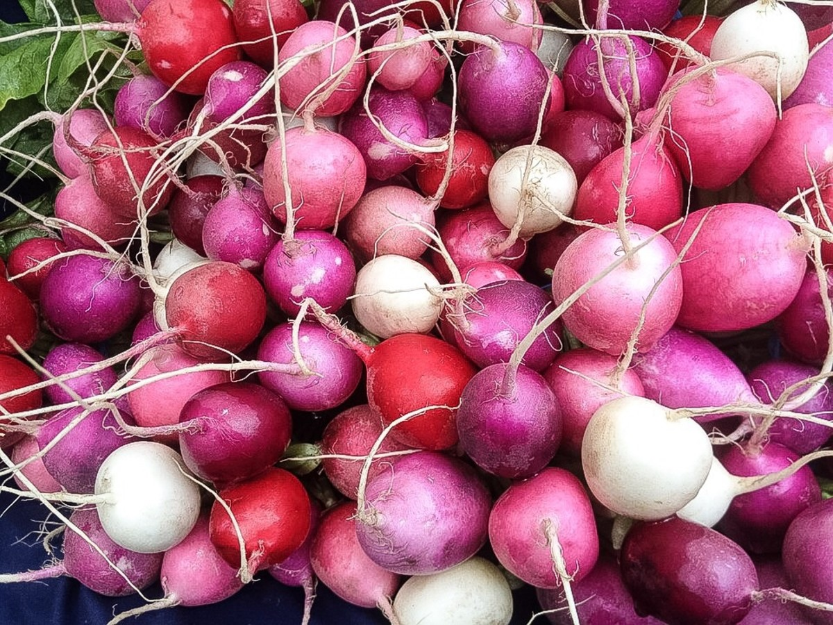 Radishes: Roots, Leaves, Nutrients, and Potential Health Benefits